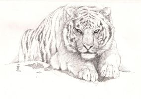 Tiger by TheRisingSoul