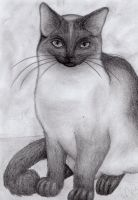 Siamese cat for Chained--Butterflies by MusicAndArtItsMyLife