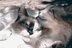 Les Chats by joaobhdeviant