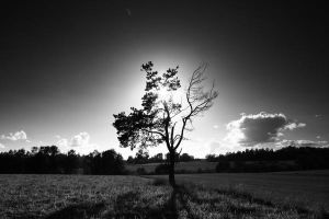 The Pine tree by Habter