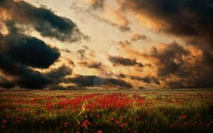 Poppies in the Sunset by slight-art-obsession