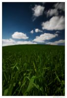 Green Green Grass by miki3d