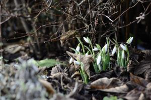 Spring is coming by Markuslajer