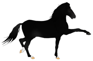 Andalusian Auction Horse 14 by HoofHaven