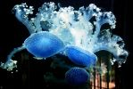 Houston Zoo - Jellyfish by BPHaines