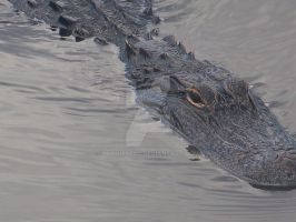 Crocodile 11 by Buggie6000