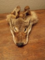 Coyote Face - For Sale by ForestWanderers