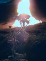 Flora and Fire 1 by lundi
