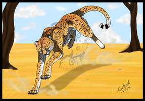 cheetah run by tussensessan