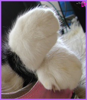 Paws by Scuria