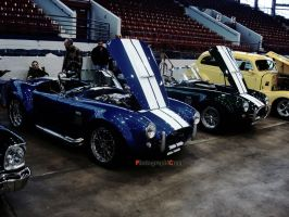 Cobras by PhotographiCreed