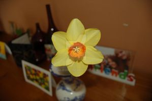 Narcis 2 by JulieDing
