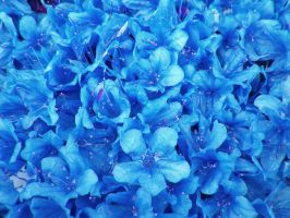Blue Flowers by Rhabwar-Troll-stock
