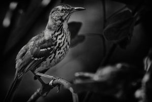 My Thrasher by clippercarrillo