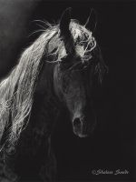 Spotlight - Scratchboard by ShaleseSands