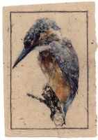 Kingfisher. by OwlDarling