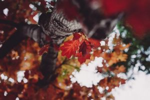 hey there, autumn :) by Rona-Keller
