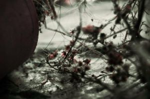 The Dead of Spring iii by hiimlucifer