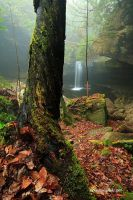 Tree, Fall and the Fog by TRBPhotographyLLC
