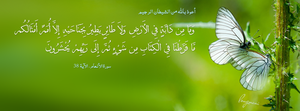 Surat Al-Anaam Aya 38 -  FB Cover by LMA-Design