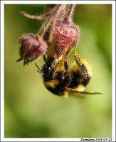 Bumblebee party by jamesboy