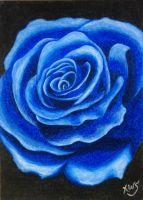 Blue Rose 'after spray' by KW-Scott
