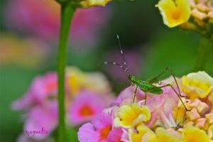 Cicada in Wonderland by FallOut99