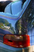 Saxo Forest by organicvision