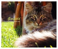 Garfield 2 by Kennydude