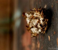 in a gang of one by scottchurch