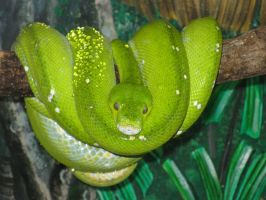 The Green tree snake by MJaaay