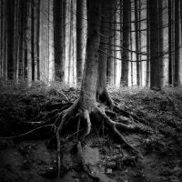 Strengh Of A Tree by DREAMCA7CHER
