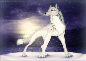White Night by Norolink