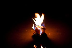 Dove and Fire by reya808