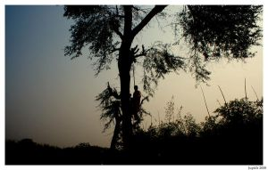 Silhouette Man - In a tree. by Jupit3r