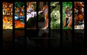 7 Tigers wallpaper by ShangyneX