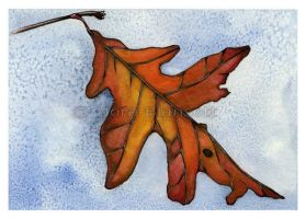 Red Oak Leaf by NoraBlansett