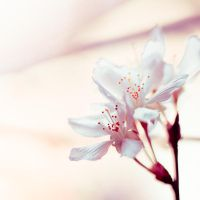 already spring inside by DanielaSchoenewald