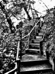 stairs to garden by choney25