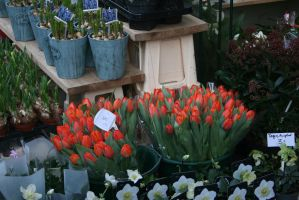 view to tulips 2 by ingeline-art