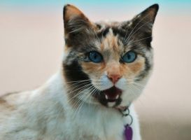 What...No more Tuna by photoquilter