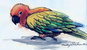 Sun Conure- Sharpie n Watercolor by moSHypants