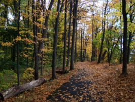 Bruce Trail In Fall by Gr8-Gatensby