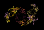 Swirling Flower Flame Fractal by steinb