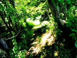 The Old Dirt Path by DCProductions223