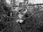 In the shrub b/w by frimmi