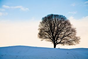 My Tree for Winter by allenjennison