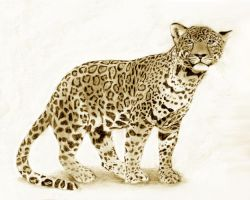 Leopard by ficus