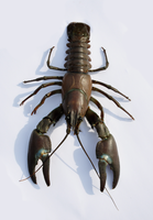 Crayfish from above by karlvandal-stock