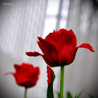 Les tulipes ont des ailes by hyneige